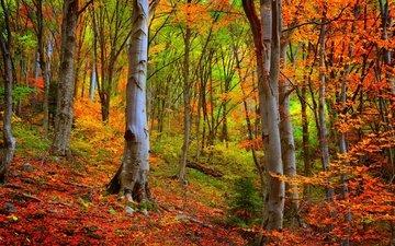 деревья, лес, осень, листопад, деревь, опадают, на природе, осен, листья, woods