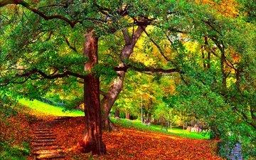 деревья, природа, парк, ветви, осень, листопад, ступени, деревь, опадают, на природе, осен, листья