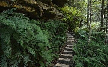 восход, лес, лучи, парк, туман, пейзажи, австралия, вс, деревь, папоротники, на природе, юг, мрачный, изгородь, уэльс, широкие, листья, летнее, национальный, грин, woods, wolfs, новая