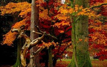 деревья, листья, парк, осень, листопад, деревь, опадают, на природе, осен, листья