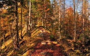 деревья, природа, лес, листья, осень, листопад, расцветка, деревь, опадают, на природе, осен, листья