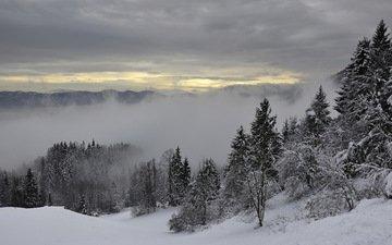 деревья, горы, снег, зима, туман