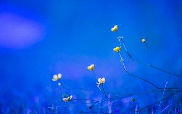 цветы, природа, весна