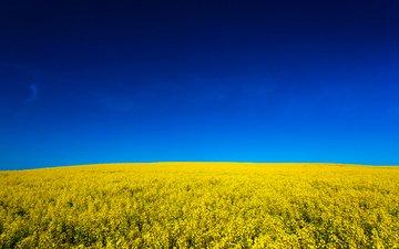небо, цветы, природа, поле, жёлтая, неба, желтое, fields, на природе, канола