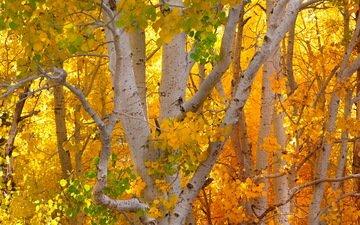 деревья, осень, деревь, опадают, autumn colors