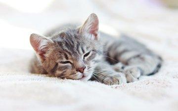 cat, kitty, sleeping, house, kittens, sleep