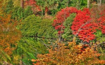 деревья, озеро, природа, отражение, осень, расцветка, деревь, опадают, на природе, лейка, осен