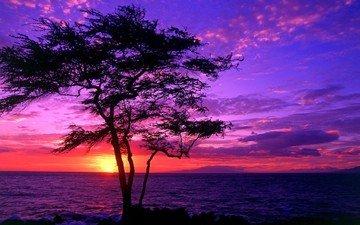 дерево, закат, пейзаж, море, beautiful scenery, дерево