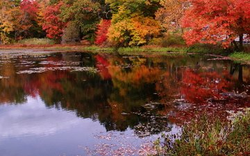 деревья, природа, листья, отражение, парк, осень, пруд, листопад, деревь, опадают, на природе, осен, листья