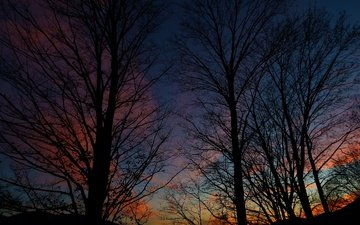 небо, деревья, вечер, природа, силуэты, неба, деревь, вечернее, на природе