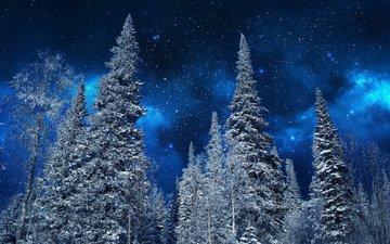 небо, ночь, деревья, снег, природа, зима, звезды, мороз, ели, неба, деревь, на природе, ноч, звезд