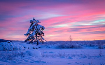 снег, дерево, закат, зима, швеция, сугробы, сосна, швеции, арвика, вермланд