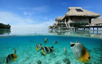 бунгало, тропики, рыба, подводный мир, коралловые рифы, виллы, голубая лагуна