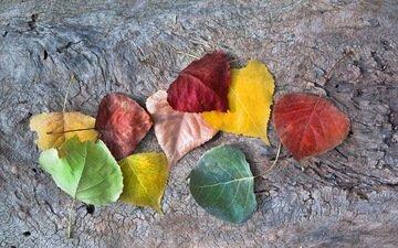 листья, осень, опадают, осен, листья, autumnal colors