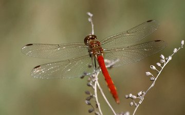 macro, insect, dragonfly, plant