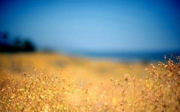небо, цветы, поле, лето, размытость