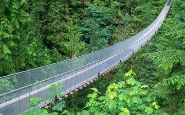 подвесной мост, брекеты, металлические сетки, зеленые джунгли