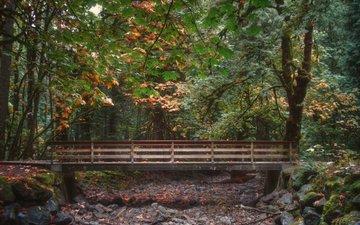 мостик, лес, листва, мост, осень, опадают, осен, листья