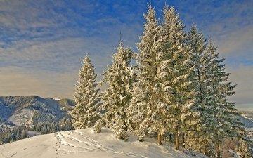 горы, снег, природа, зима, мороз, гора, следы, ели, деревь, на природе, lanscape, изморозь