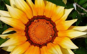 желтый, макро, цветок, лепестки, цветком, газания