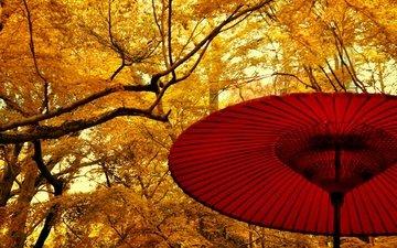 деревья, листья, осень, япония, сад, зонт, жёлтая, желтые, японии, деревь, опадают, на природе, осен, листья