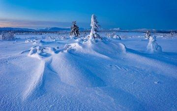 деревья, снег, зима, швеция, сугробы, швеции, лапландия, gitsfjallets nature reserve