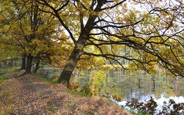 озеро, осень, опадают, лейка, осен