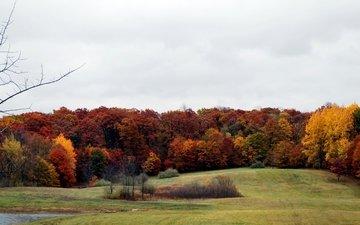 деревья, лес, поле, осень, расцветка, опадают, осен