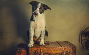 стиль, ретро, обработка, собака, щенок, чемодан, вентилятор