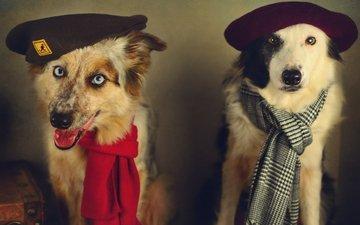 стиль, ретро, обработка, образ, пара, собаки, берет, шарф, аксессуары, друганы, портет