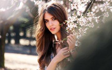 обои, девушка, модель, сакура, нежность, клара алонсо
