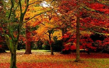 деревья, природа, листья, парк, осень, листопад, деревь, опадают, на природе, осен, листья
