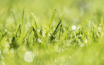 light, grass, nature, plants, green