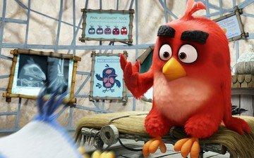 красный, птицы, остров, перья, кино, игры, angry birds, сердится, sugoi, subarashii, анимационные фильмы, rovio entertainment, судейкис, columbia pictures