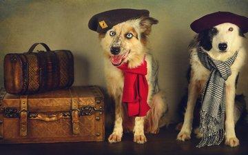 ретро, обработка, пара, собаки, берет, шарф, чемоданы, аксессуары, путешественники, друганы, шарфы