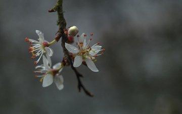 ветка, весна, цвететение