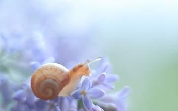 макро, цветок, животное, растение, улитка