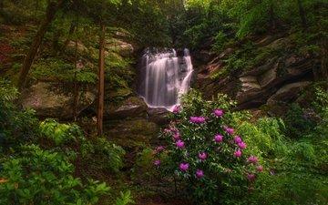 деревья, скалы, лес, водопад, рододендроны, северная каролина, seven falls, этова