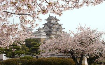 цветение, замок, япония, японии, himedzi