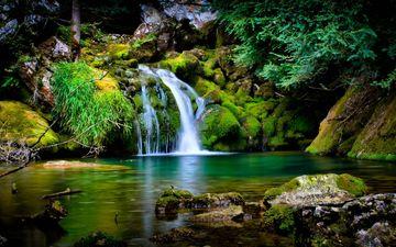 трава, деревья, вода, природа, камни, листья, водопад, ель, мох