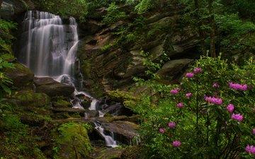 скалы, водопад, куст, рододендроны, северная каролина, seven falls, этова