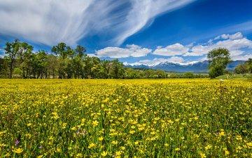 небо, цветы, облака, деревья, горы, природа, лес, пейзаж, поле, неба, деревь, ландшафт, на природе, цветы, болгария