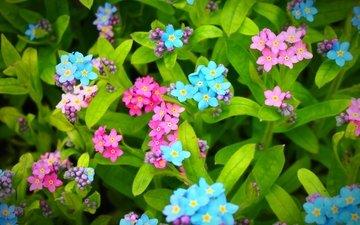 листья, расцветка, цветочки, цветы, листья