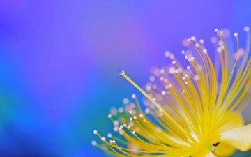 цветок, лепестки, краски, экзотика