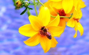 yellow, insect, flower, bee