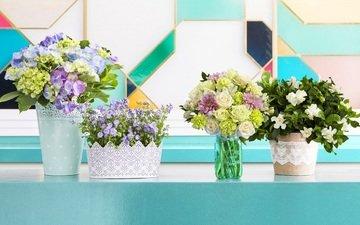 цветы, декор, букеты
