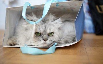 глаза, кот, кошка, взгляд, пакет, сумка, пушистая, кошка персидская