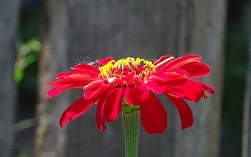 цветок, капли, красный, паутина, краcный, боке, цветком