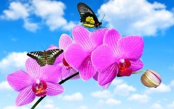 небо, облака, цветок, бабочки, голубое, орхидея, крупным планом