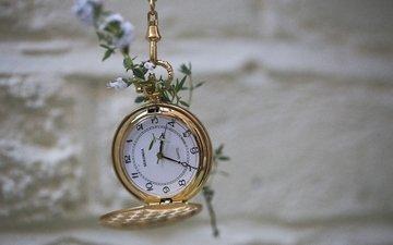 макро, цветок, стена, часы, боке
